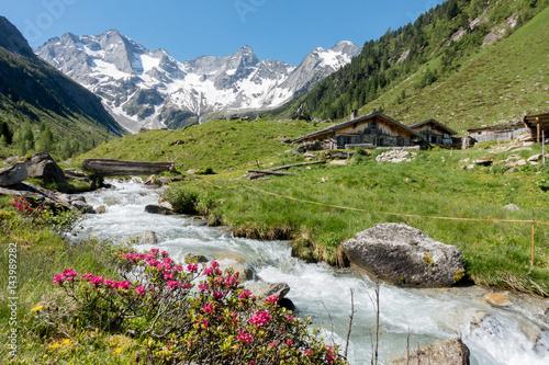 Leinwanddruck Bild Almhütten mit Gebirgsbach Alpenrosen und Gletscher im Hintergrund