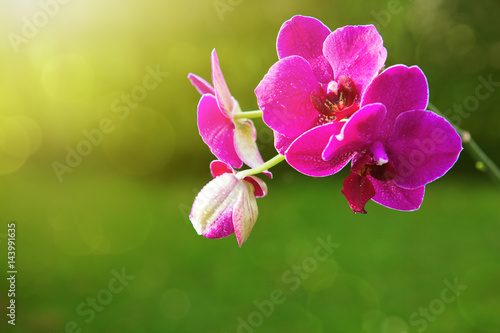 pink-orchid-flowers-in-the-garden