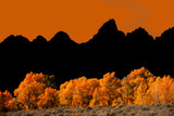 Grand Teton with autumn golden aspens