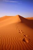 desert in sahara in morocco