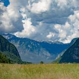Summer landscape. Meadow on mountain.