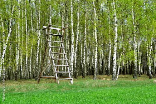 ambona myśliwska na skraju lasu