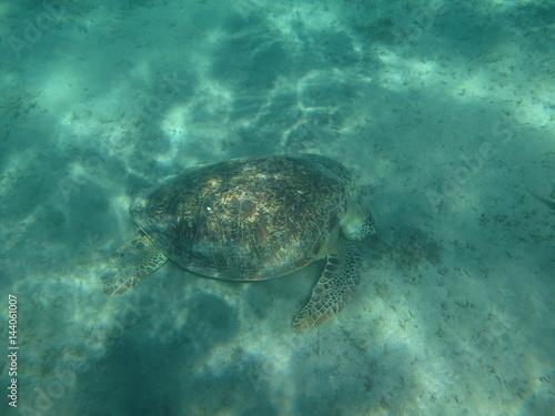 Poster tartaruga acquatica