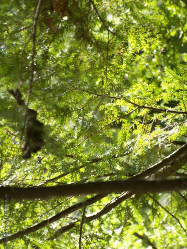 Foto op Plexiglas Landschappen Detail of Pine Tree Branches