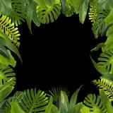 Fototapety Tropical Jungle Leaves Background