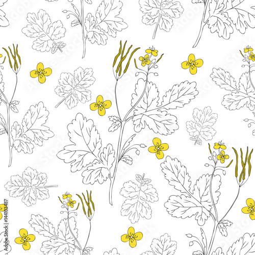 Celandine flower hand drawn graphic vector botanical illustration, seamless floral pattern, ink sketch isolated on white background, medical plant, line art for card, natural medicine, design cosmetic