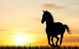 Силуэт лошади на фоне заката