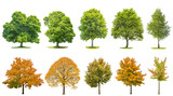 Trees isolated white background Oak maple linden birch - 144126878