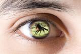 Eye of man watching wild horse