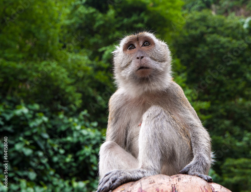 Monkey sitting above and looking straight ahead.