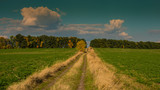 Road in the field and trees in autumn