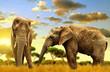 Elephants on the savannah at sunset.