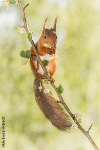 relaxed on the apple branch