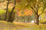 The park in autumn time