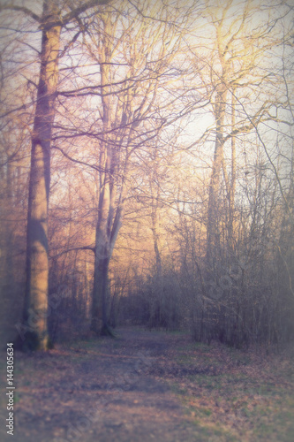 Tuinposter Aubergine Low sun through trees in the woods