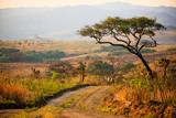 Krajobraz w Parku Narodowym Nyika - Malawi