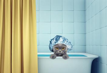 cute wet cat in the bath