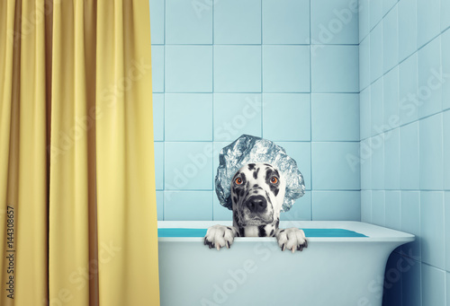 cute wet dog in the bath
