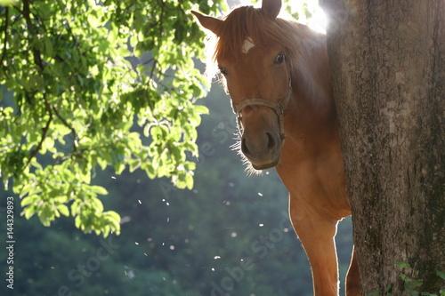 Horse near the tree