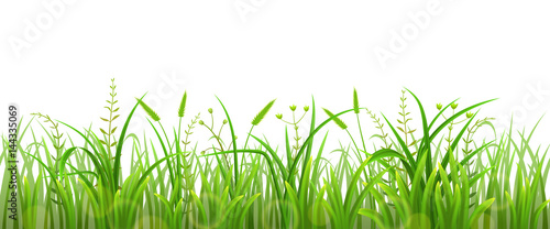 Green grass isolated on white background - 144335069