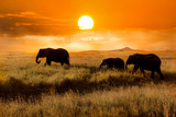 Family of elephants at sunset in the national park of Africa - 144358805