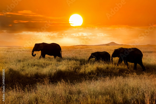 Family of elephants at sunset in the national park of Africa Poster