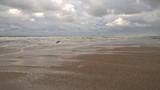 Norderney, Strand, Hund, Möven