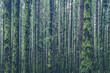 overgrown trees inside  forest