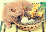 Little ginger kitten lying on a basket with colored eggs on bamboo pad. Easter concept scene. Retro color