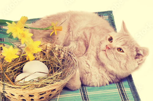 Poster Little ginger kitten sleeping near a basket with two eggs