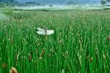 緑の風景 ・朝の草原