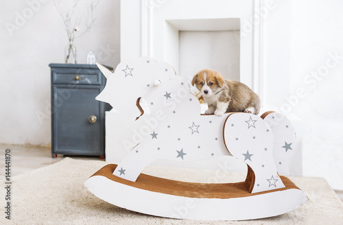 Poster Corgi puppy leaning on a rocking horse in nursery room