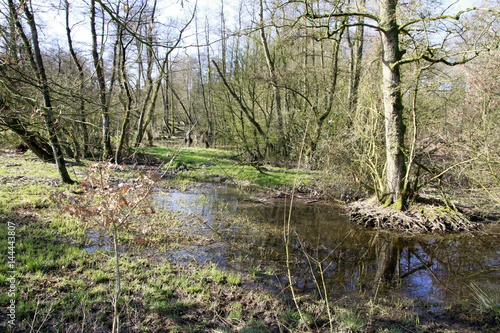 Biotope, Nature conservation, Blumenthal, Lower Saxony, Germany, Europe Poster