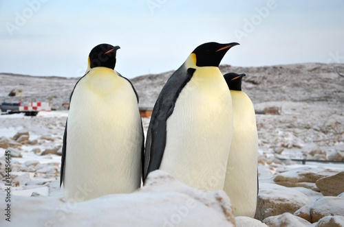 Plakát Emperor Penguin in Antarctica on a background of snow. Close-up.
