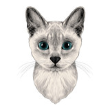 the head of a cat breed Australian mist symmetric, sketch vector graphics color picture