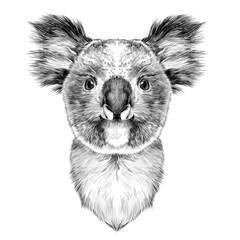 the head is symmetrical Koala looking right, sketch vector graphics black and white drawing