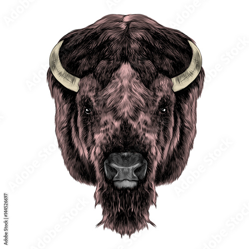 the Buffalo head is symmetrical, looks right, sketch vector graphics color picture