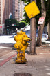 Fire hydrant yellow on the street in the city in Los Angeles