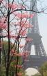 Eiffel tower in bloom, Paris, France