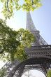 Eiffel tower with spring trees, Paris