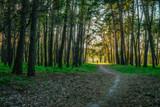 Nature of Ukraine - spring forest