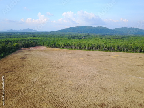 Deforestation. Rainforest cleared for oil palm plantationss