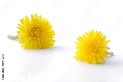 yellow dandelion flower on white