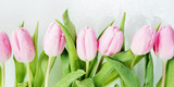 Pink tulips flowers