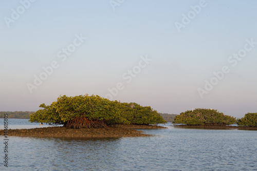Dawn light over mangrove area of Thousand Islands in Everglades, Florida
