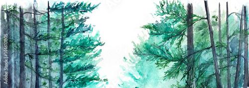 dekoracyjne-drzewa-w-lesie