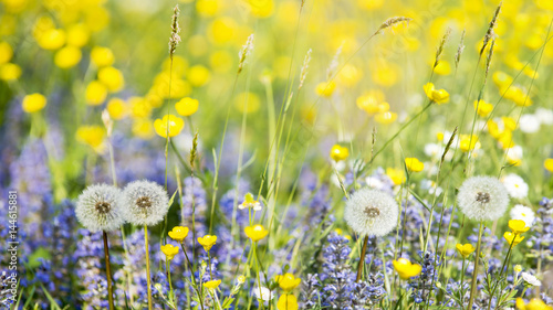 Fototapeta prato fiorito
