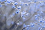 Fantasy toned nature background in vintage blue color.