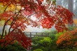 Fall Colors by the Moon Bridge in Portland Japanese Garden