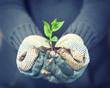 grüne Pflanze in den Händen halten - new life Konzept